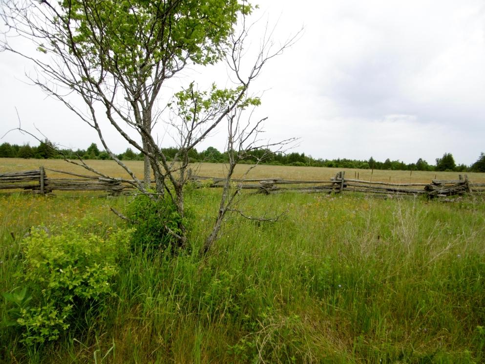 Alvar grasslands.