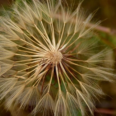 Nature's ferris wheel