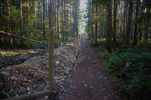 Or along a path amidst tall trees.